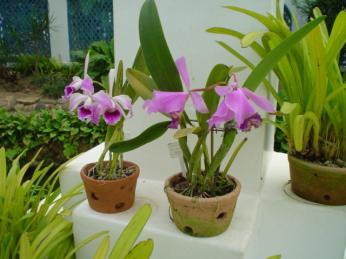 Jardim Botânico (2)