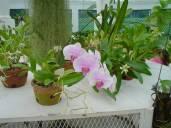 Jardim Botânico (3)